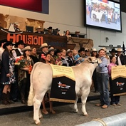 Houston Livestock Show and Rodeo™ Junior Market Steer buyers generously invest in the future