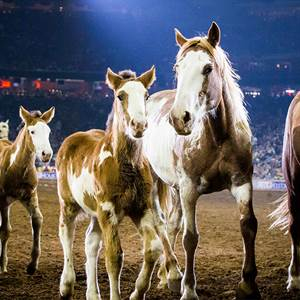 Houston Livestock Show and Rodeo™ celebrates record-breaking attendance of more than 2.6 million fans at the 2017 Show
