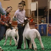 A Family Affair at the 2018 Houston Livestock Show and Rodeo™ Junior Market Lamb and Goat Show Championship Selection