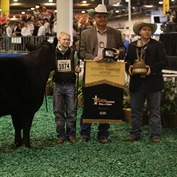Continental Breeds Rose to the top in the 2018 Houston Livestock Show and Rodeo™ Supreme Champion Heifer Drive