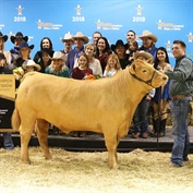 Grand and Reserve Grand Champion Steers Recieve High Bids at the 2018 Houston Livestock Show and Rodeo™ Junior Market Steer Auction