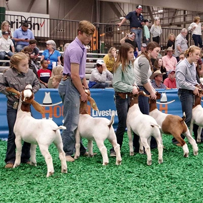 Houston Livestock Show and Rodeo Awards More Than $9.3 Million in Premiums to 2020 Junior Exhibitors Impacted by the Early Closure