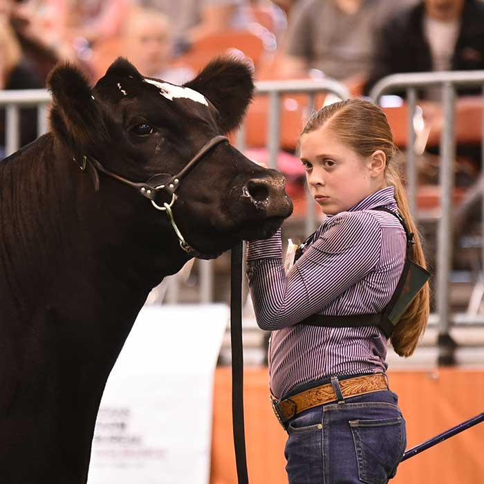 Champions Crowned At Houston Livestock Show And Rodeo