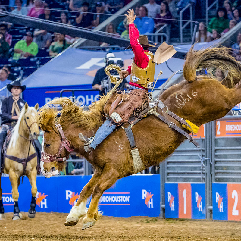 Houston Livestock Show And Rodeo And The Professional