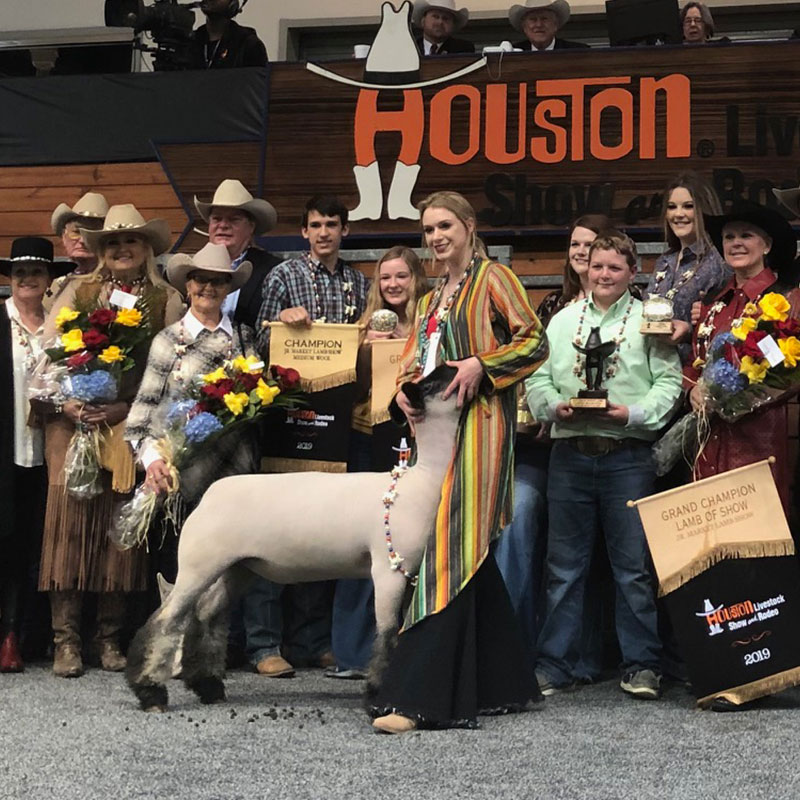 2019 Lamb Amp Goat Auction Houston Livestock Show And Rodeo