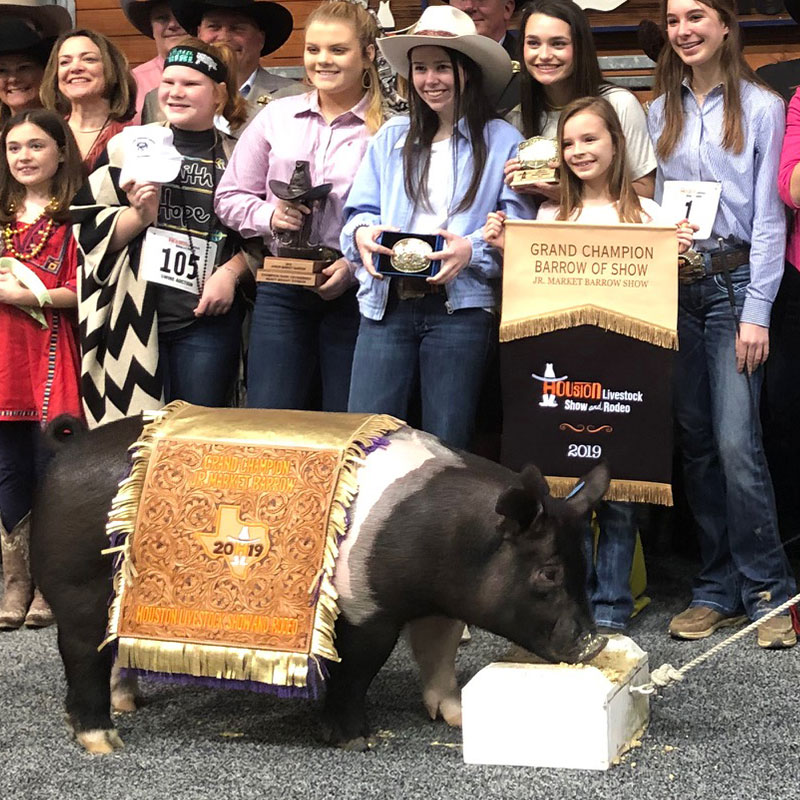 Barrow Auction Houston Livestock Show And Rodeo